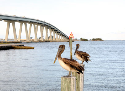sanibel-birds-bridge
