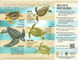 Protect Florida's Sea Trutles