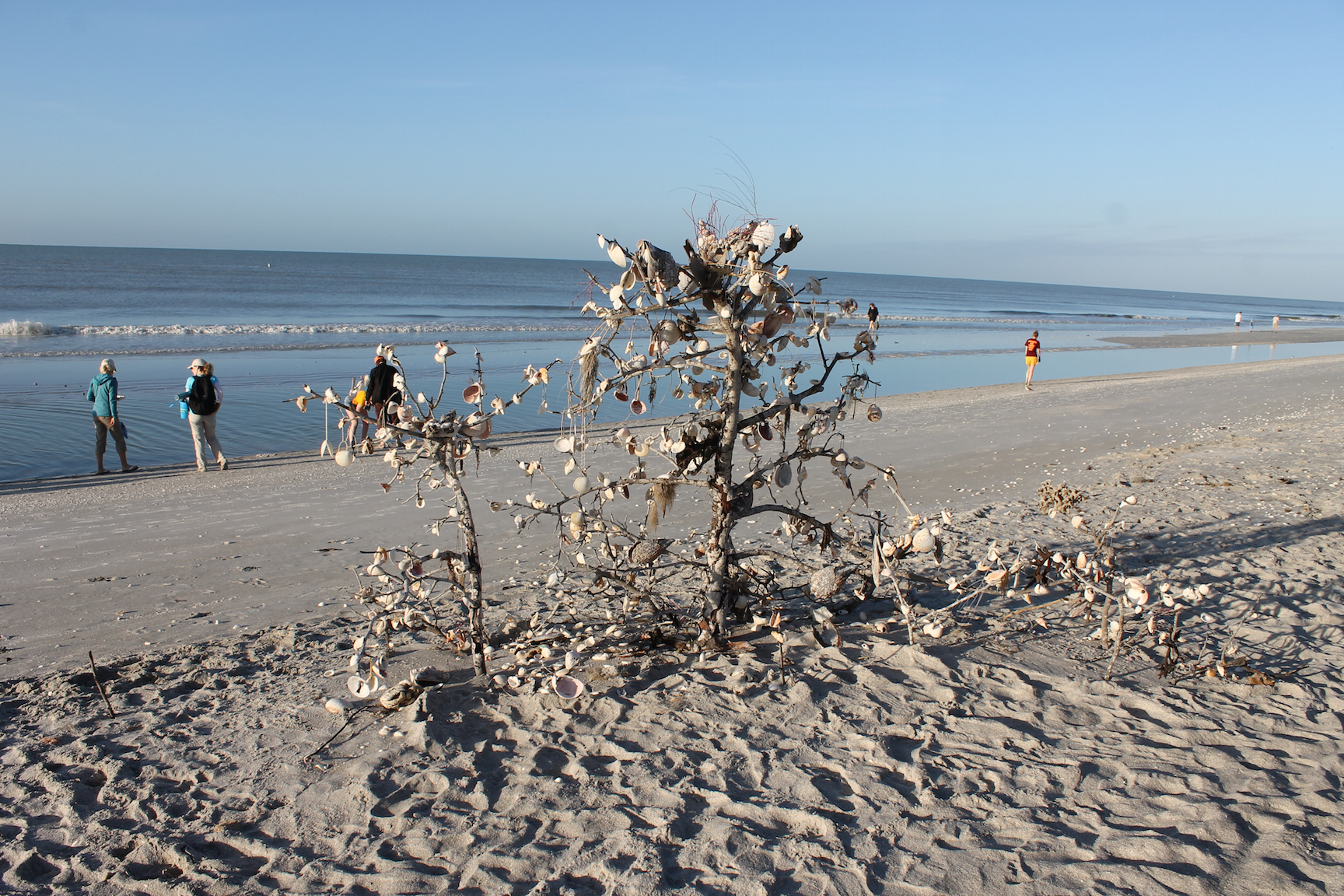 island-inn-sanibel-shelling-january-2015-104