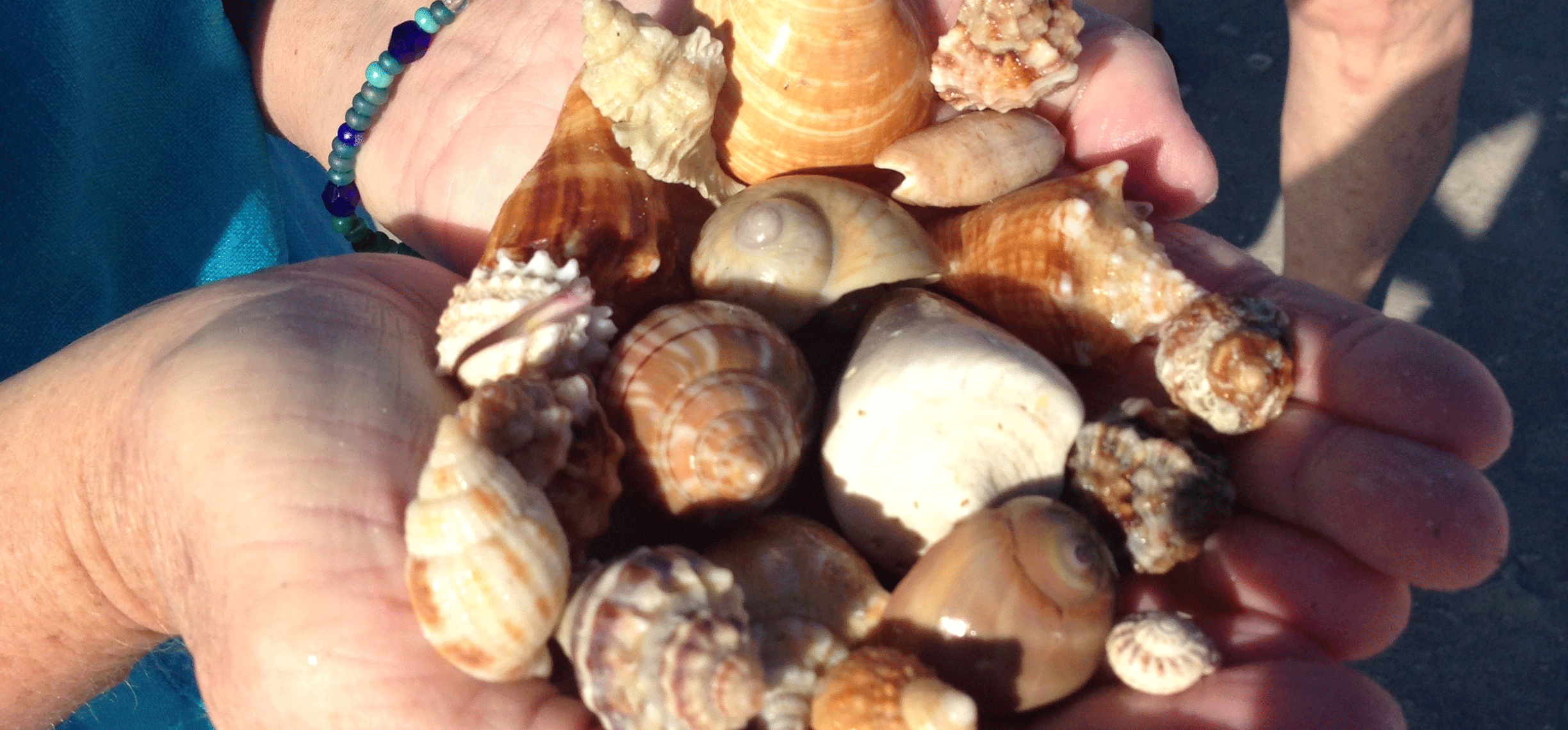 island-inn-sanibel-shelling-january-2015-151