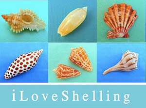 shelling_new