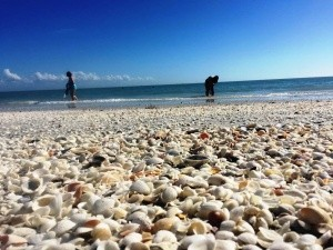 island-inn-sanibel-shelling-january-2015-336-min-min