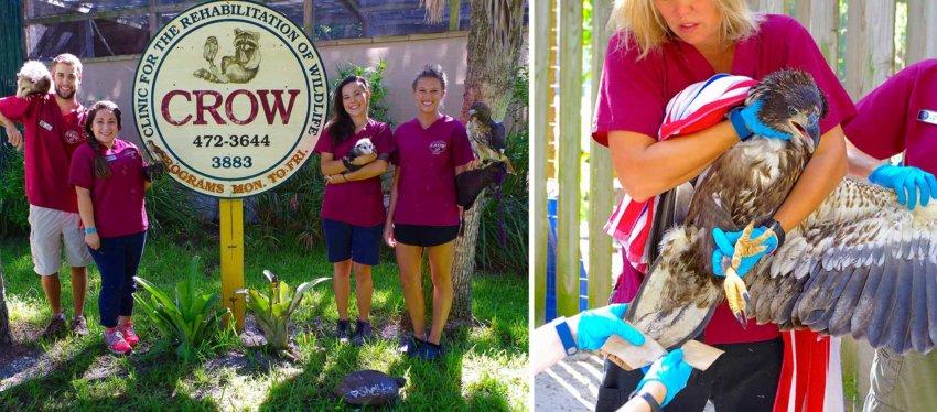 CROW - Clinic for the Rehabilitation of Wildlife