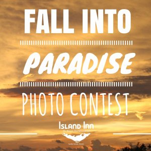 Photo Contest Header