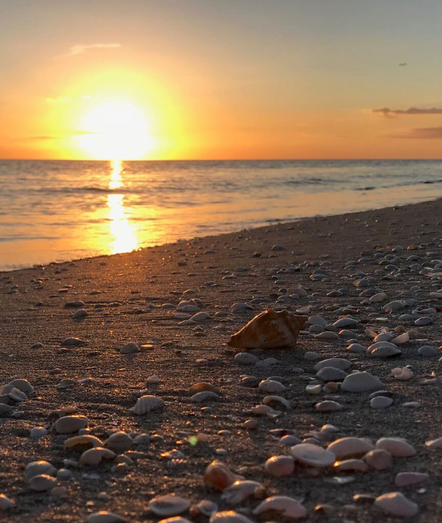 king's crown shell at sunset on sanibel
