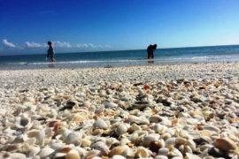 Things To Do On Sanibel Island